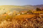 Krstasica-rakija-Irig.jpg