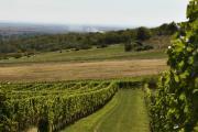 Izgled vinograda 2.jpg